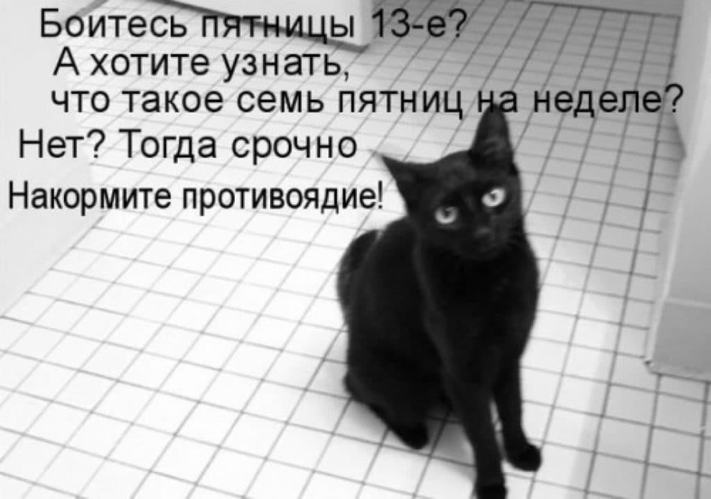 черный кот сидит на полу