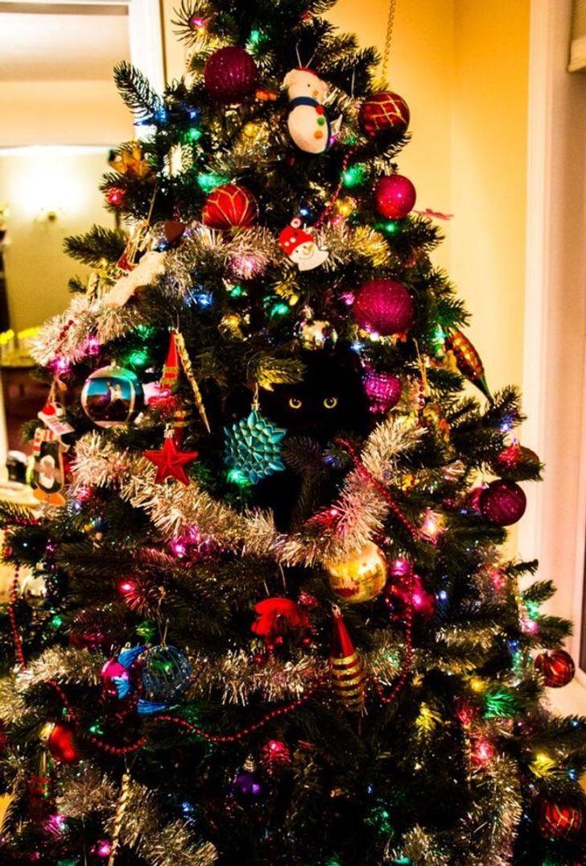 черный кот сидит на елке