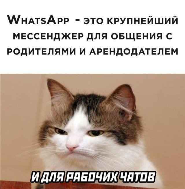 cbdb8534_resizedScaled_740to753.jpg