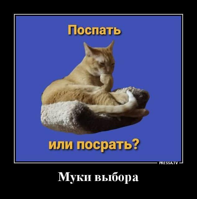Демотиваторы 02.12.2020 Приколы,pressa,tv,юмор