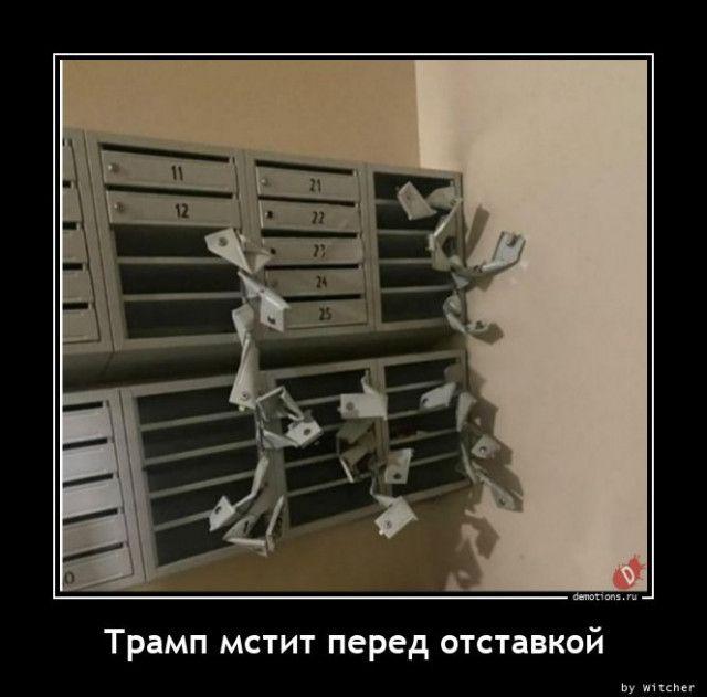 1606984431_demki-4.jpg