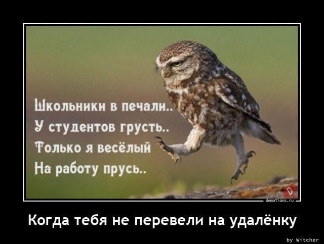 1606895943_demki-7.jpg