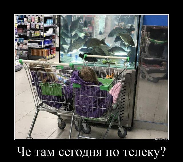 1606895930_demki-8.jpg