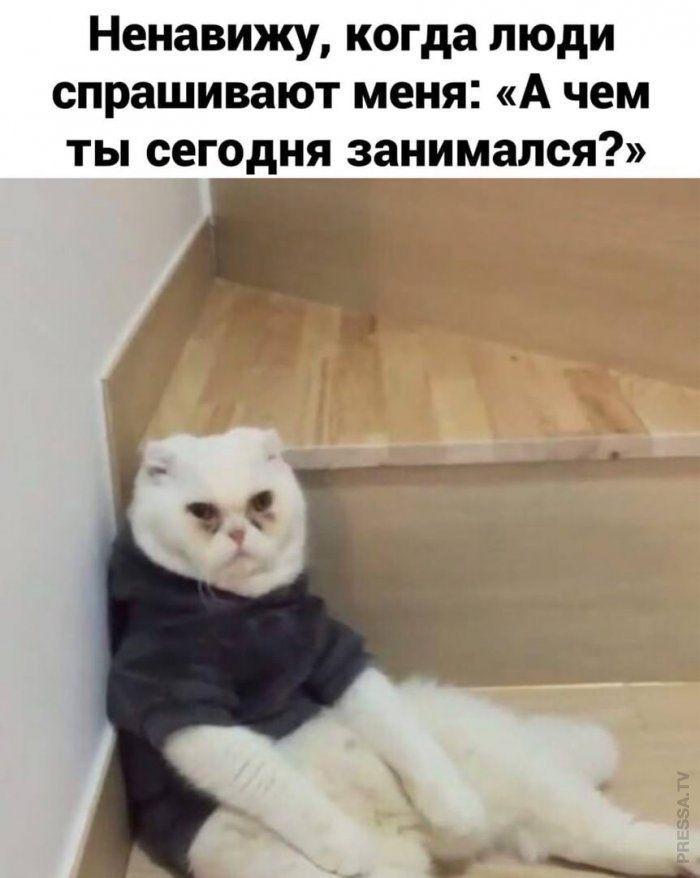 Прикольные картинки ❘ 20 фото Приколы,ekabu,ru,смешное,фото