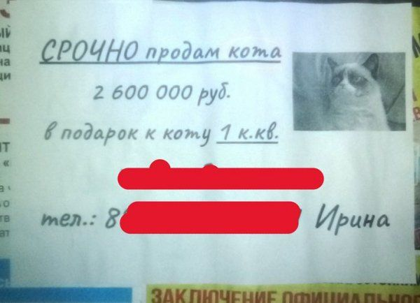 205260_2_trinixy_ru.jpg