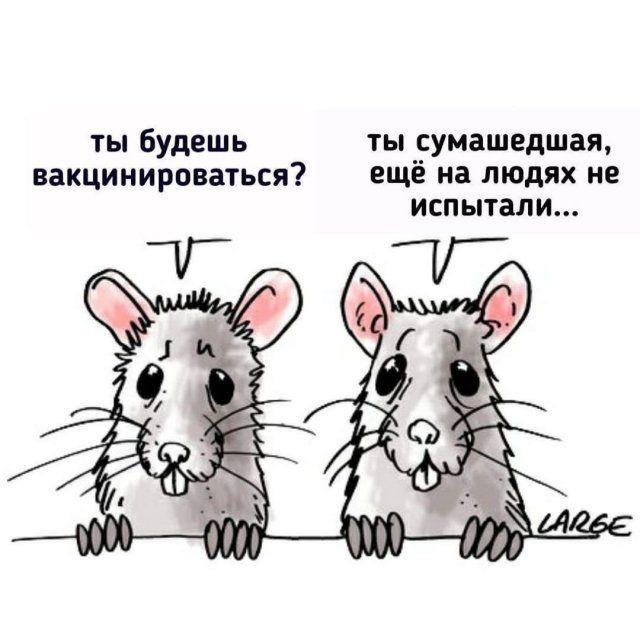 koronaviruse-kartinki-memy-citaty-vkontakte-vkontakte-smeshnye-statusy