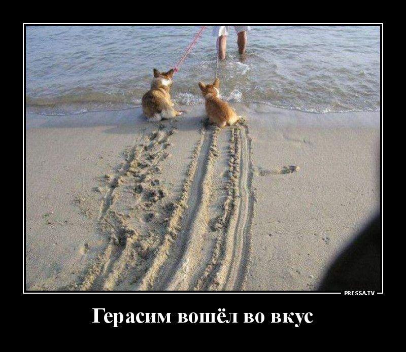 Демотиваторы 16.12.2020 Приколы,pressa,tv,юмор