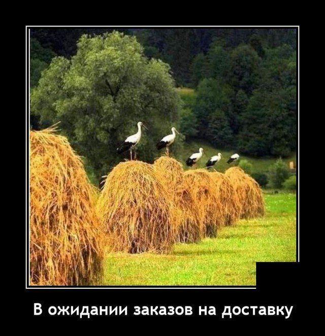 demotivatory-svezhie-demotivator-smeshnye-demotivatory-demotivator-so-smyslom