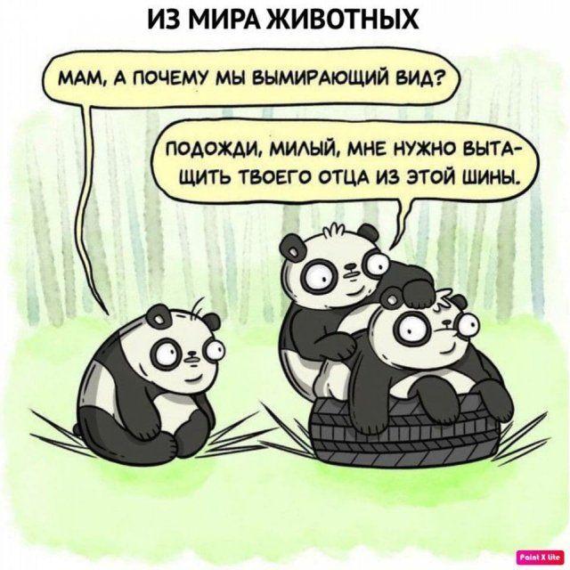 detey-yazhmaterey-istorii-citaty-vkontakte-vkontakte-smeshnye-statusy