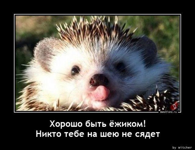1608623900_demy-8.jpg