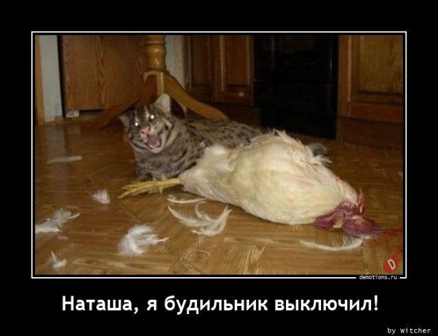 1608623939_demy-15.jpg