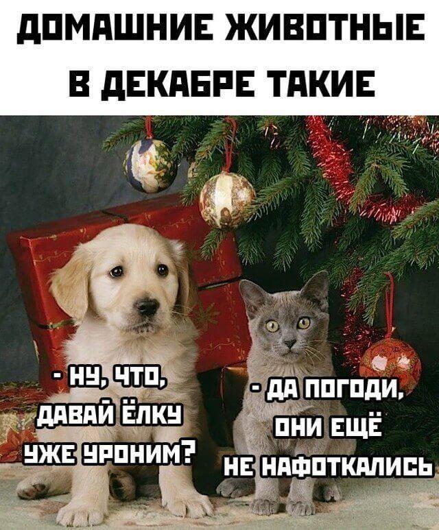 1608897670_prikol-8.jpg