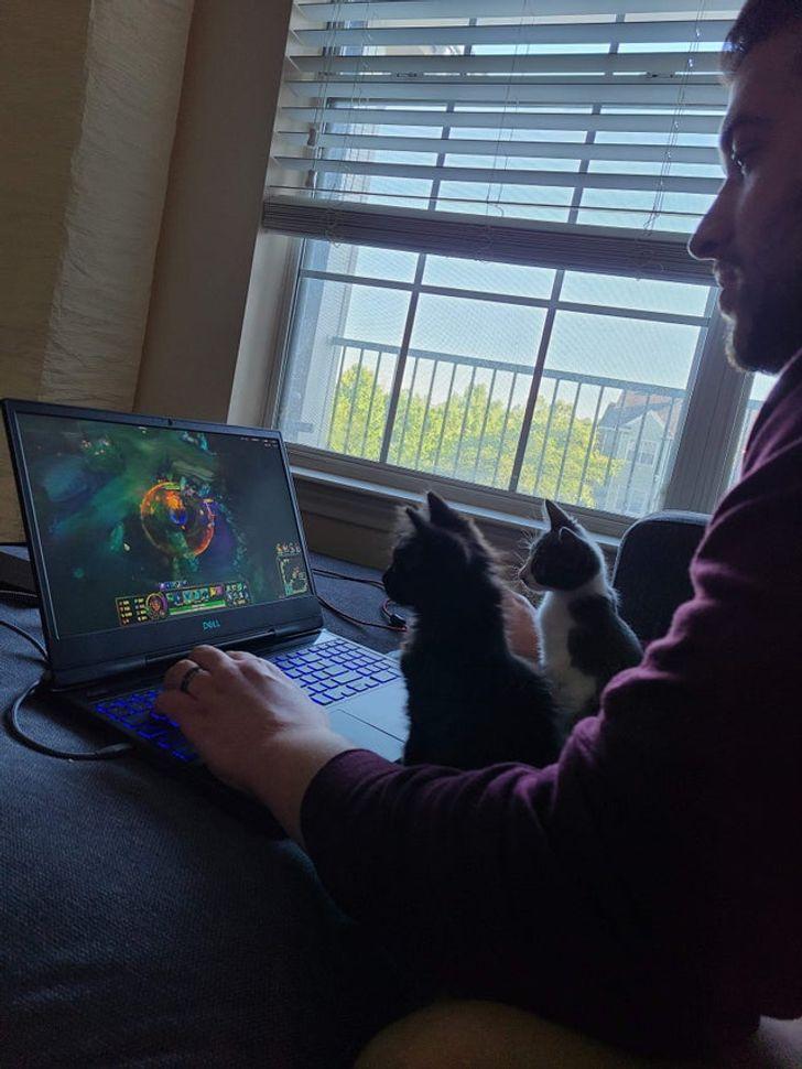котята смотрят на экран ноутбука