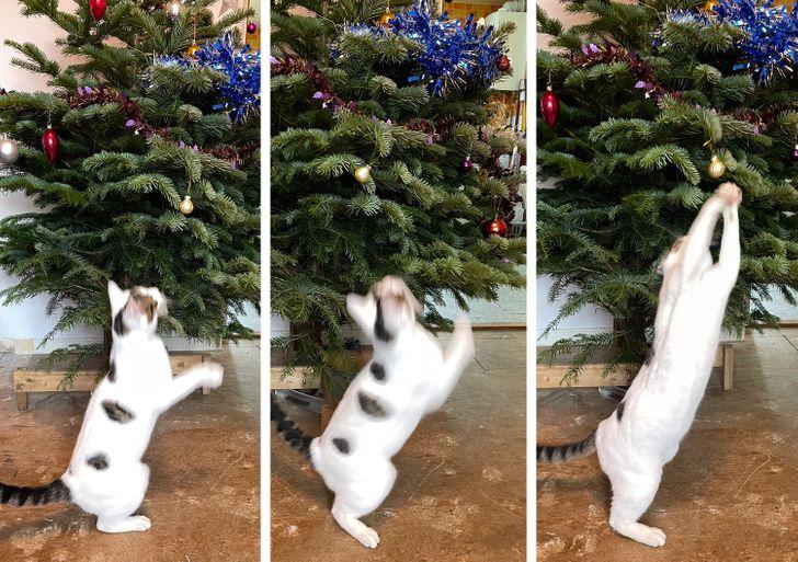 белый кот снимает игрушку с елки