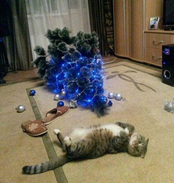 полосатый кот лежит рядом с перевернутой елкой