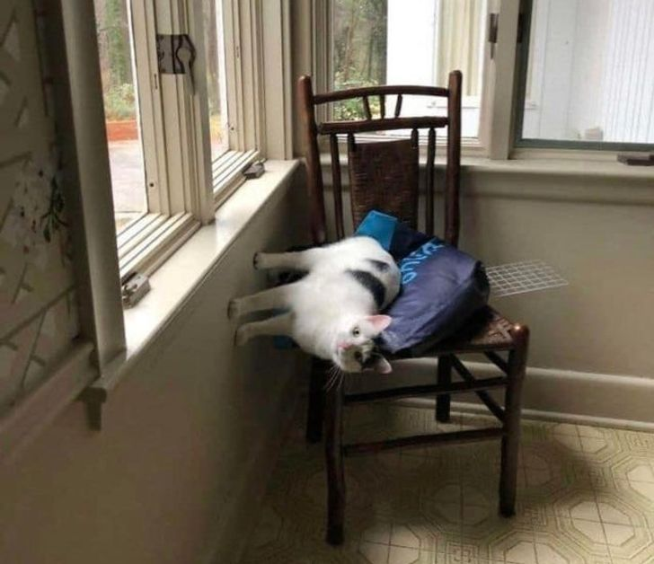 белый кот упирается лапами в стену