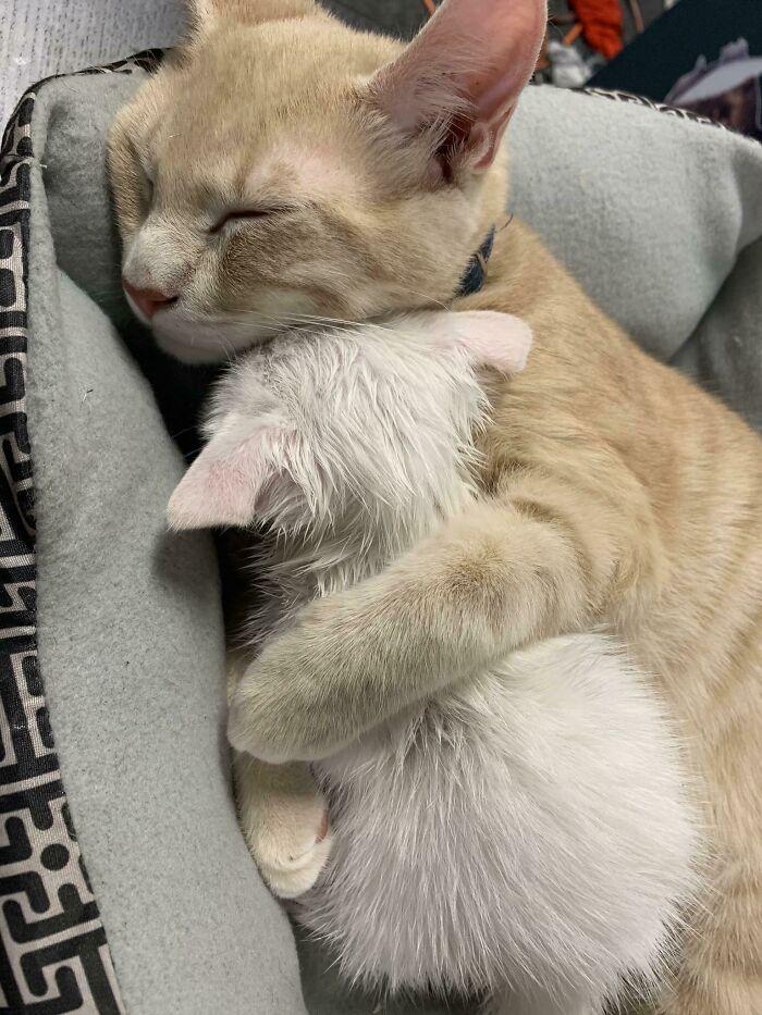 15 фото спящих котов, которые поднимут вам настроение