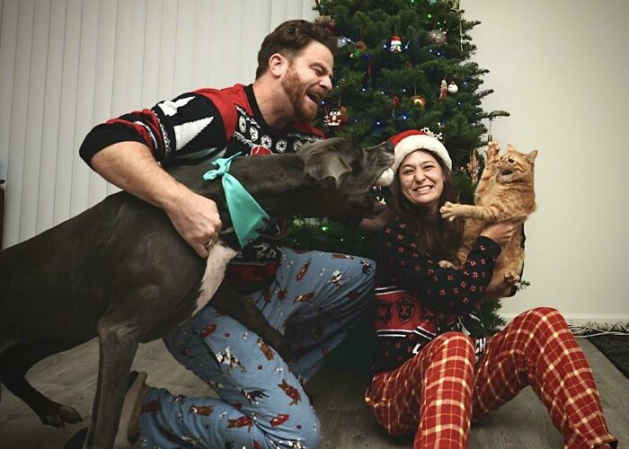 женщина с рыжим котом и мужчина с собакой у елки