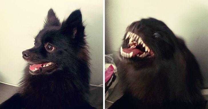 черная собачка