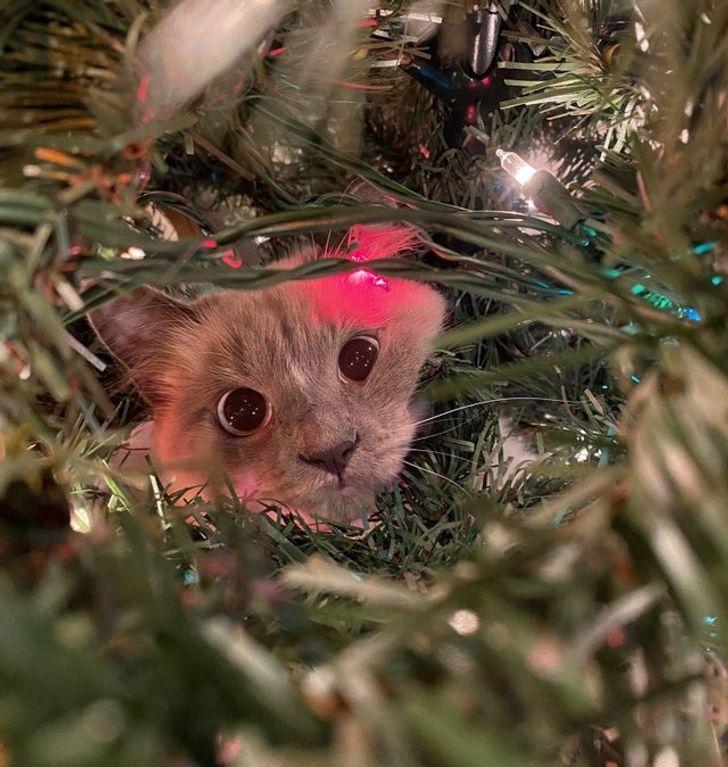 серый кот сидит на елке