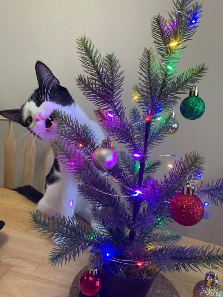 кот грызет искусственную елку