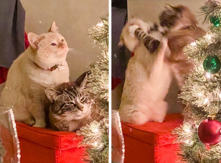 два кота дерутся возле елки