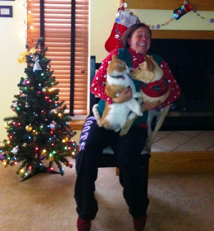 женщина с собакой и котом на руках возле елки