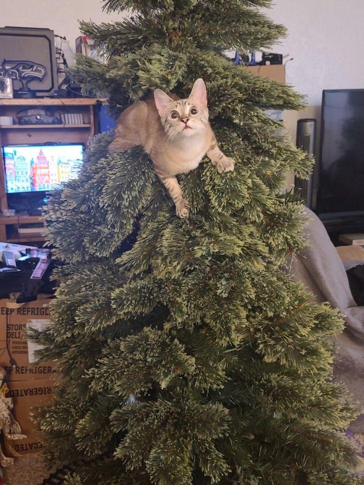 рыжий кот сидит на елке
