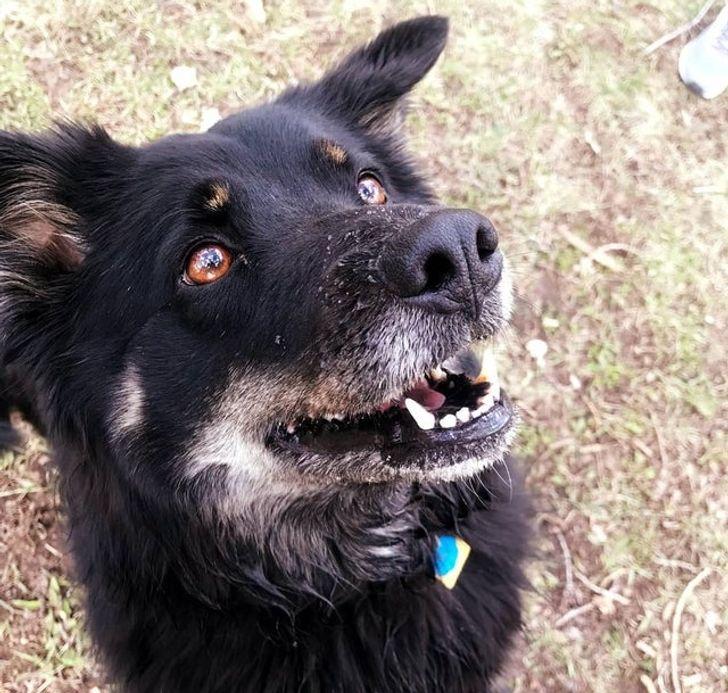 черная собака смотрит вверх