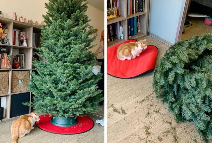 рыже-белый кот перевернул елку
