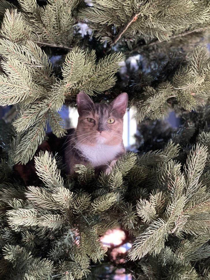 кошка сидит на елке