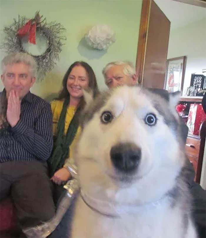 10+ собак-непосед, испортивших новогодние фотографии
