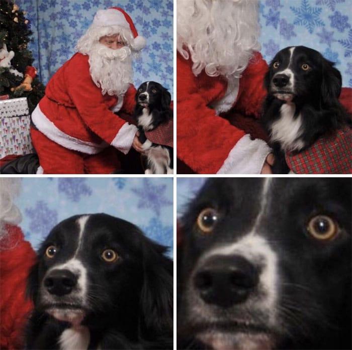 санта клаус и черная собака