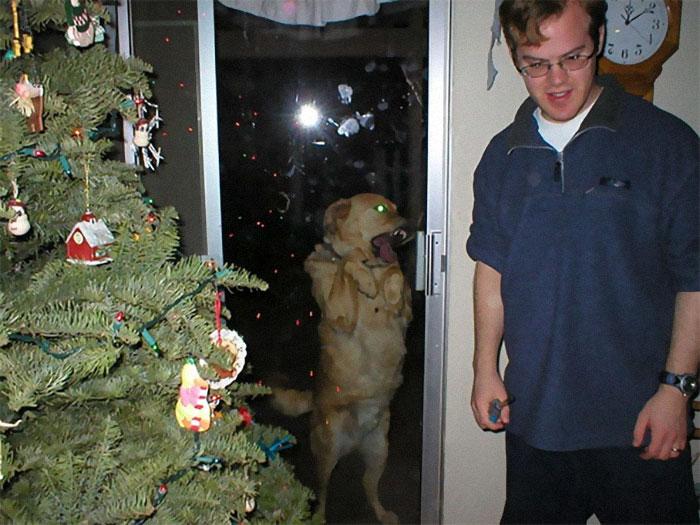 собака стоит за стеклянной дверью
