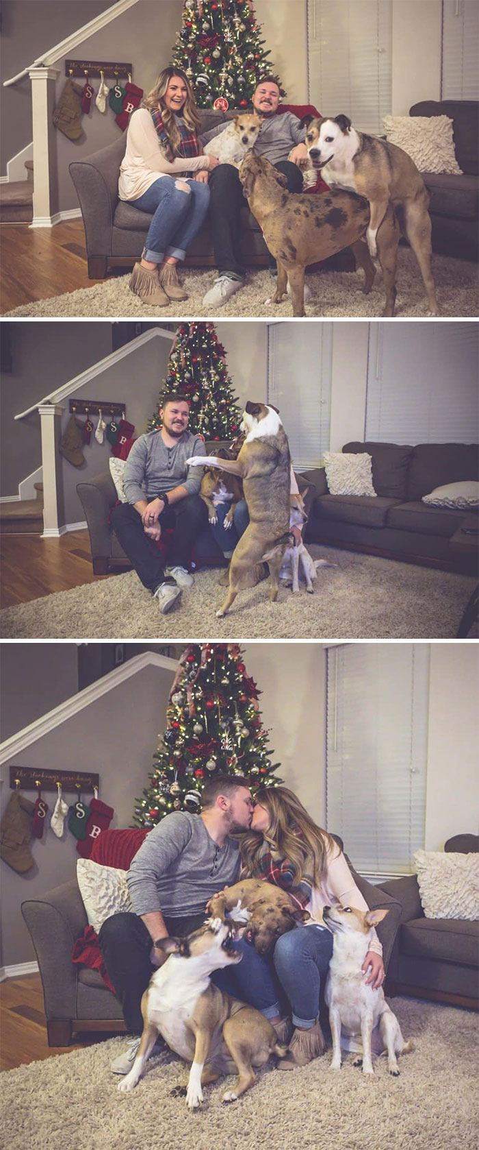 пара с собаками у елки