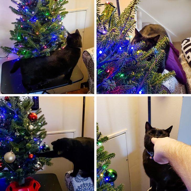 черный кот играет с игрушками на елке