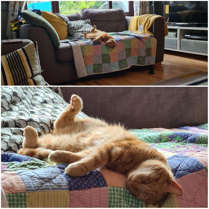 рыжий кот спит на диване