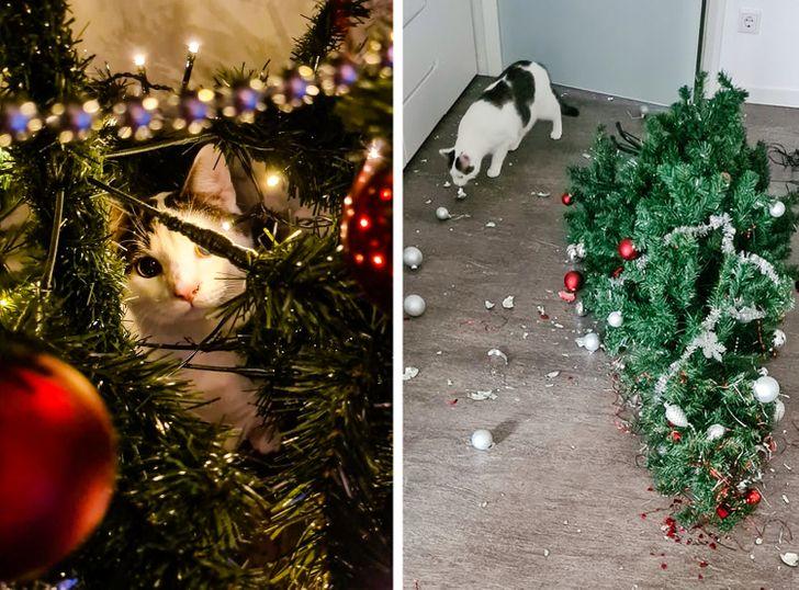 кошка рядом с перевернутой елкой