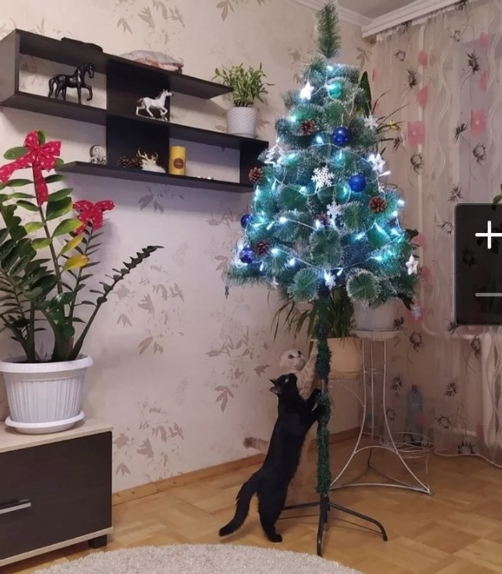 черный кот смотрит на елку