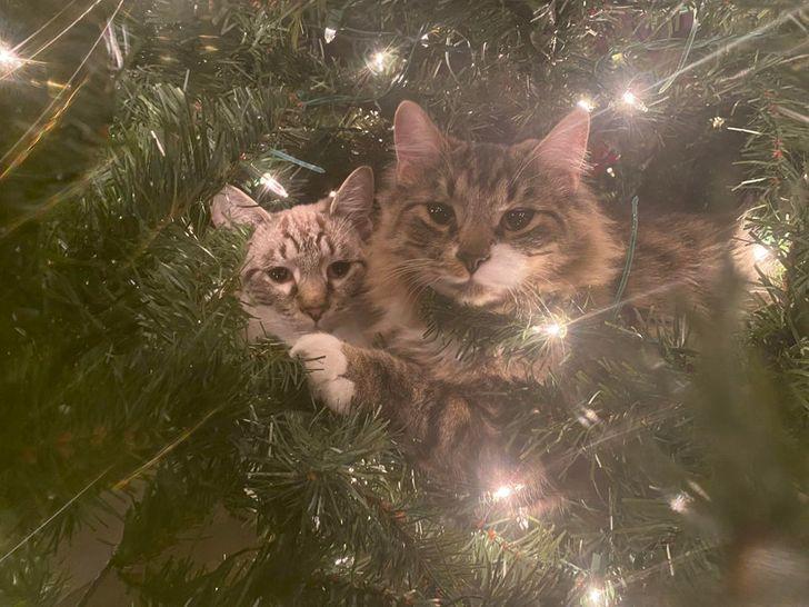 коты сидят на елке