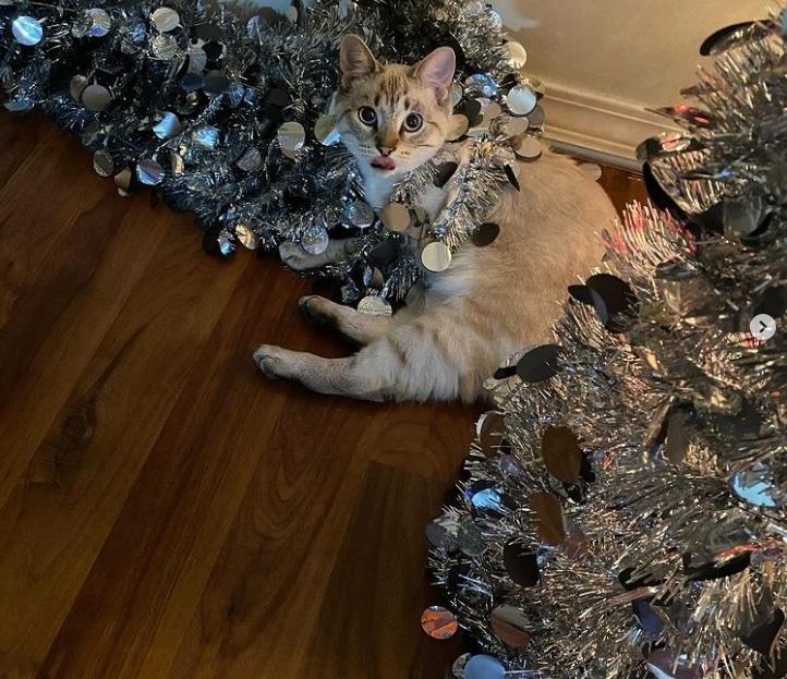 кошка с серебристыми елками