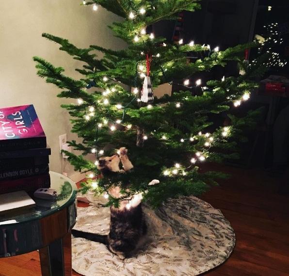 кошка рядом с украшенной елкой