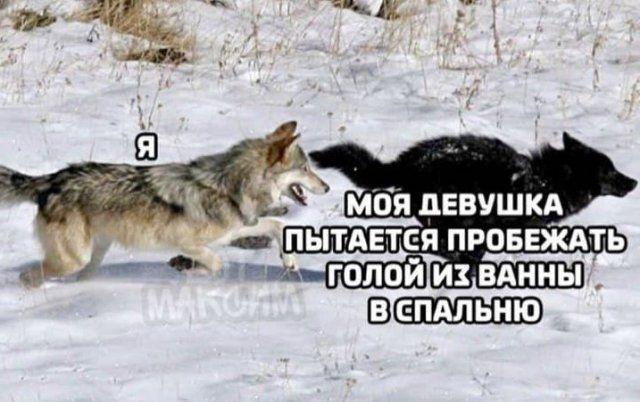206323_4_trinixy_ru.jpg