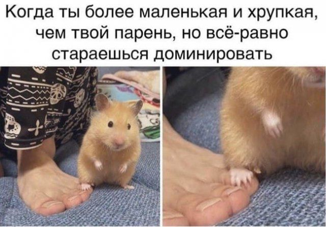 206386_15_trinixy_ru.jpg