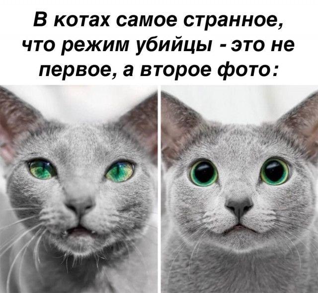 1610097795_prikol-1.jpg