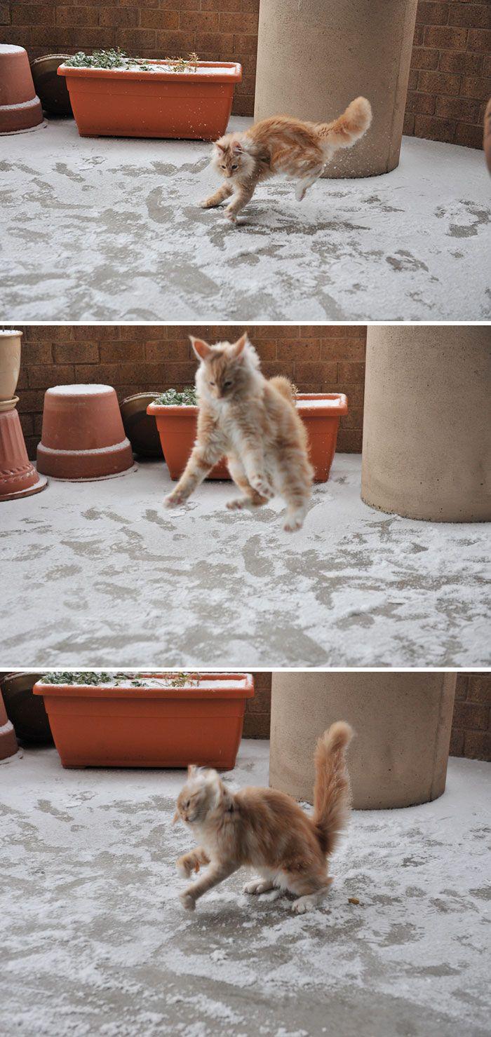 рыжий кот ступает по снегу