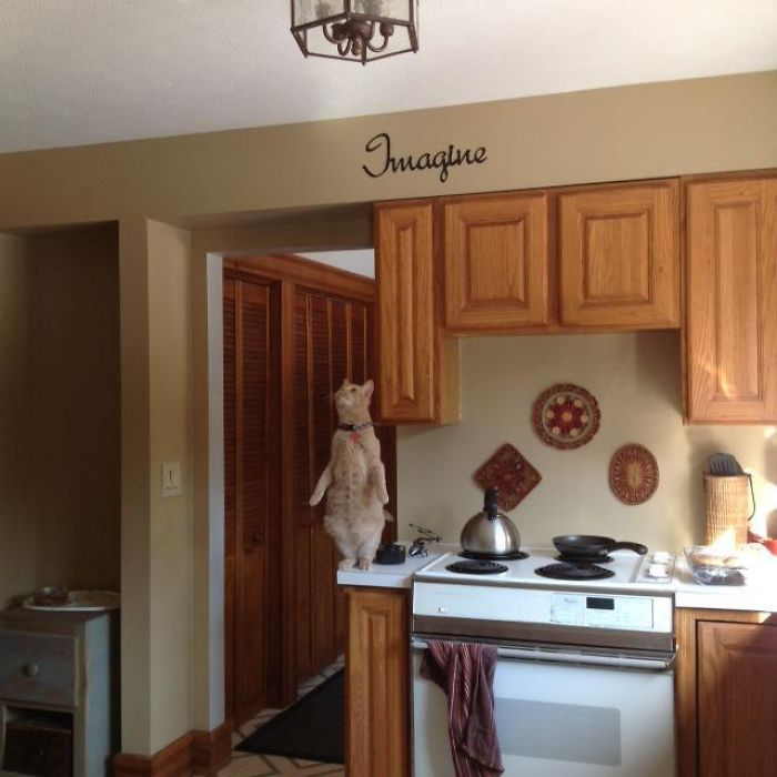 10+ фото котов, которые чудят без какой-либо причины кошка, любит, котов, которые, время, стоять, чтобы, ванну©, отличились, своих, YourNameWiselyRedditИ, хозяев©, каждый, выбирает, новое, место, засады12, подглядывать, пугать, часто