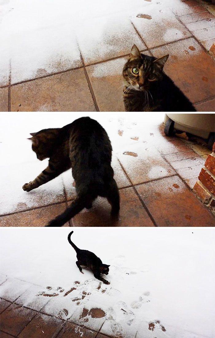 полосатый кот ходит по снегу