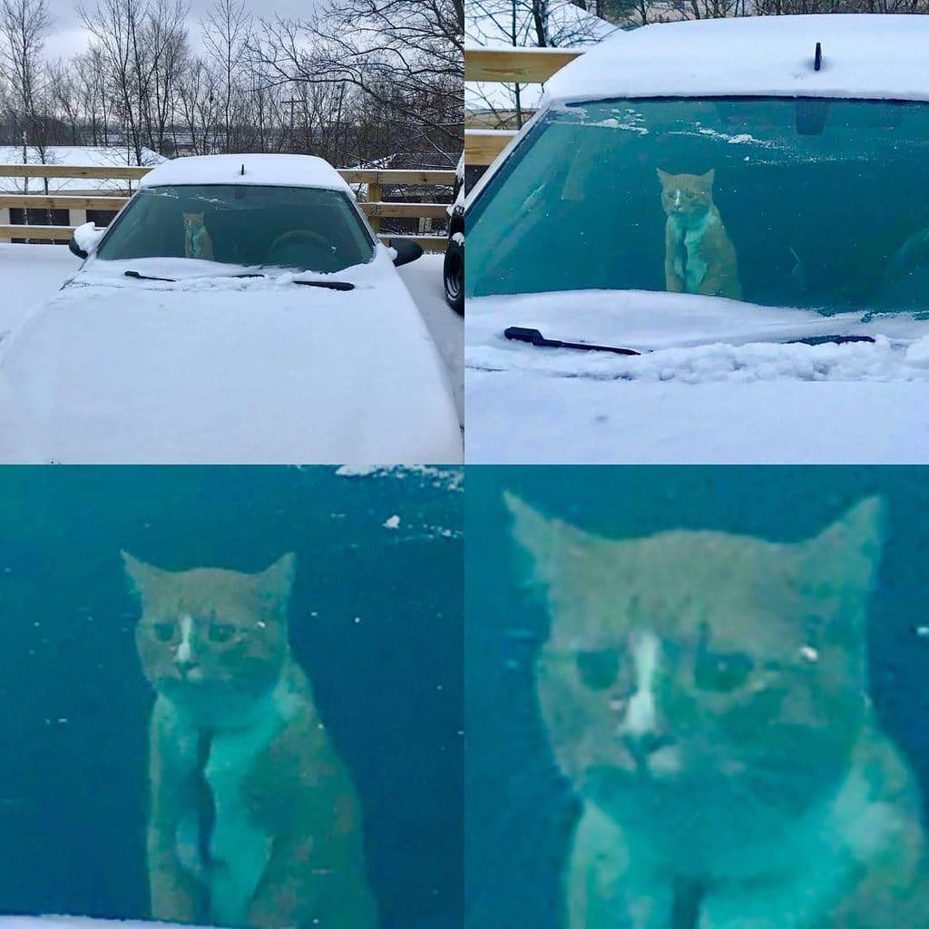 рыжий кот смотрит в лобовое стекло