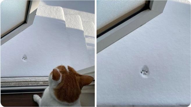 отпечаток кошачьей лапы на снегу